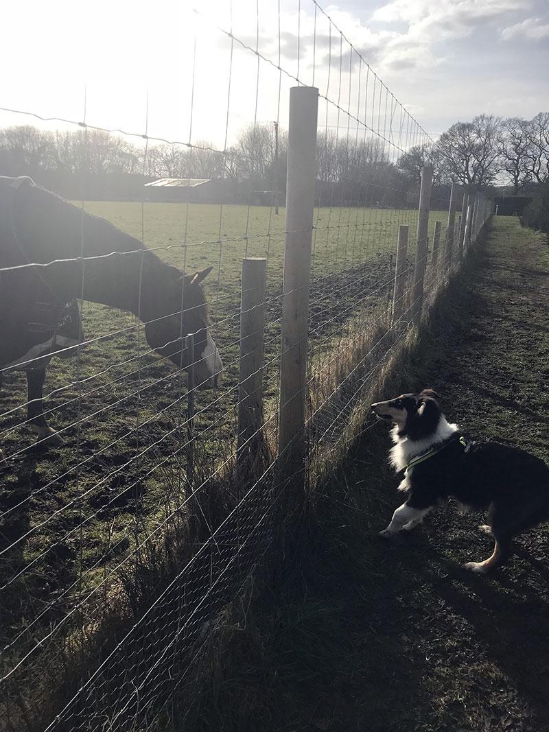 fencing_3